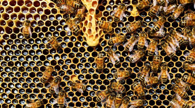 AAP : La ruche de l'histoire. Le printemps de l'histoire environnementale